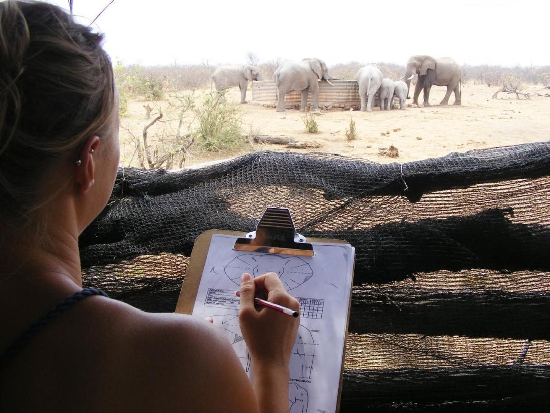 ボツワナでゾウの生態系調査をサポートする環境保護ボランティア